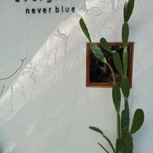 シラチャのおしゃれかふぇ オーガニックに癒される【エバーグリーン ネバーブルー】Evergreen never blue