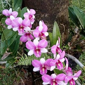 裏庭で咲く蘭