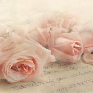 親愛なるシスターMへのお手紙【聖母マリアの役割について】