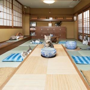 最強癒し体験♪大阪の都会のど真ん中で味わえるホッコリ空間『猫の時間』居続けたくなる和の雰囲気☆
