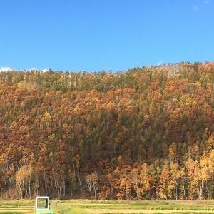 秋の道央ひとり旅 -美瑛の丘と天人峡編(その2)ー