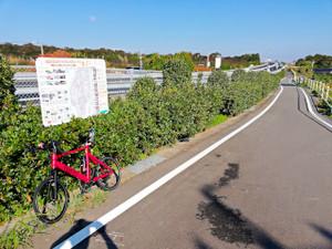 師崎漁港朝市サイクリング