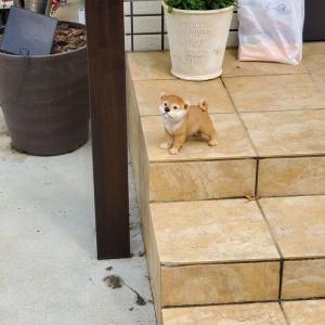 「うわっ!本物の犬かと思った」