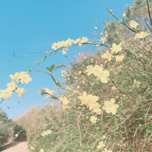 花粉症による肌荒れ前に、肌バリアを高める。