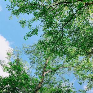 穏やかな日をイメージしたアロマに、癒される。