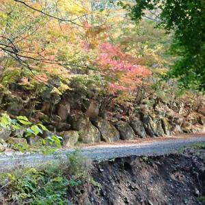 道志の森は秋でした