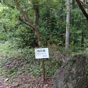 がんばれ!道志のキャンプ場