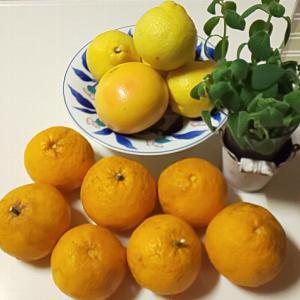薬と柑橘類の飲み合わせ