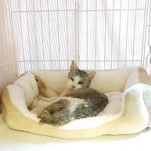 ダイソーの猫ベッド