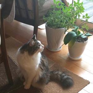 絶対にこっちを見ない猫