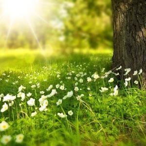 努力する人は希望を語り、怠ける人は不満を語る~井上靖の言葉②