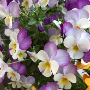 【追加募集】無料zoomレッスン、牛乳パックで作る花びんカバー