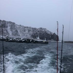 今年初のサクラマス釣り