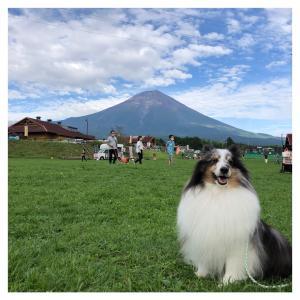 ドッグマルシェ富士山(*´ェ`*)