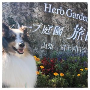 ハーブ庭園 旅日記(*´ェ`*)
