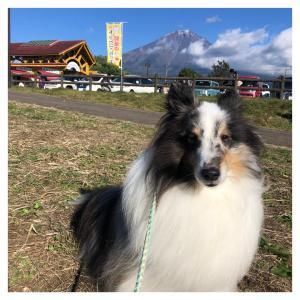 ドッグマルシェ富士山2日目(*´艸`*)