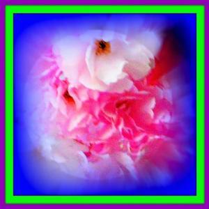 👼🐉〖八重桜〗に【河童大明神様】出現❢❢