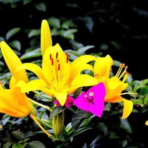 👼🐉大都会・清流に咲く〖花々達〗光景❢❢