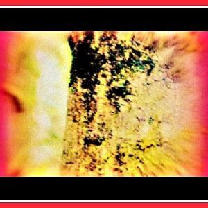 👼🐉〖青木ヶ原樹海〗樹木に【🔥明王様🔥】出現❢❢