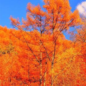 👼🐉【西沢渓谷】煌びやかな《樹木美❢❢》