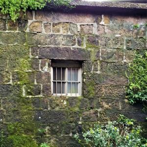【外壁やサイディングの洗浄方法】コケ落としの方法と原因・防止策