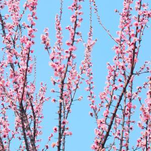 3月は東日本大震災復興支援です