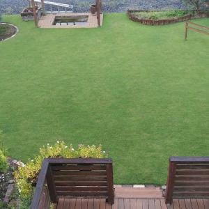 10月の芝生 先月、殺菌剤と除草剤散布したのですが・・・