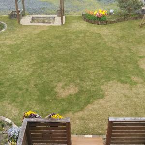今年の芝生がピンチです!