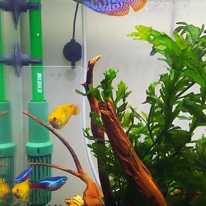 熱帯魚水槽