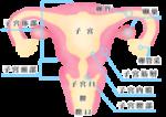 2019年今年も子宮頸がん検診を受けました。
