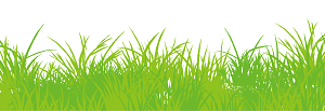 憎き雑草。除草剤でこうしてやる。できるなら隣の家の雑草も…。