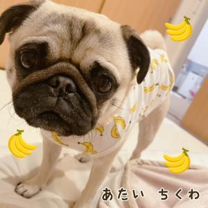 バナナを着てちくさんぽ〜