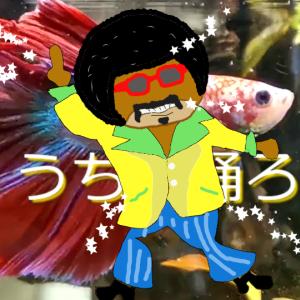 星野源『うちで踊ろう』に合わせ赤ベタ君が踊る動画を作ってみた