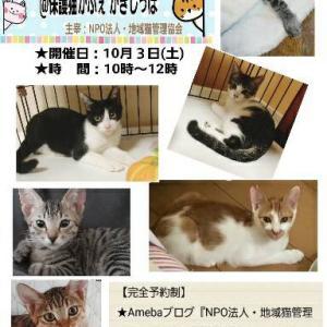 【予約受付開始】10/3 子猫のお見合い会@かぎしっぽ様を開催します!