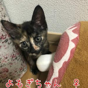 10/3 子猫お見合い会の参加猫さんのお知らせ