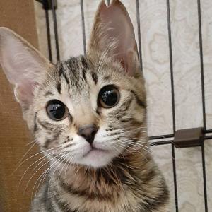 2021年1月 里親募集猫さんのお知らせ【お問い合わせお待ちしてます】