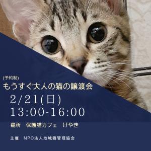 2/21もうすぐ大人猫の譲渡会開催@保護猫カフェけやきについて