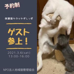 (予約受付開始!)3/6 かぎしっぽ子猫&中猫ゲストのお知らせ