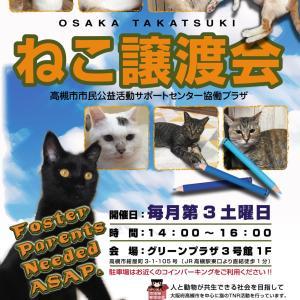3/20猫の譲渡会@高槻グリーンプラザ 参加猫さんのお知らせ