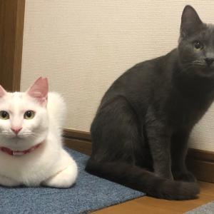 4/11 安満遺跡公園譲渡会 参加猫さんのお知らせ