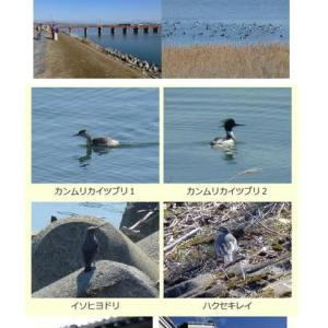 2013年1月27日(日) 加古川探検 4