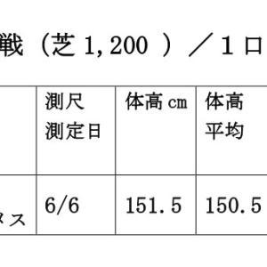 【6月14日(日)新馬戦】測尺評価