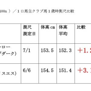 6月20日(土)東京・阪神・函館新馬戦/測尺評価