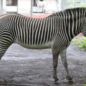 おっ。これはいい馬体。残口があれば逝きたい。