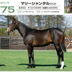 【写真から良馬を選ぶ】馬体選びのポイント