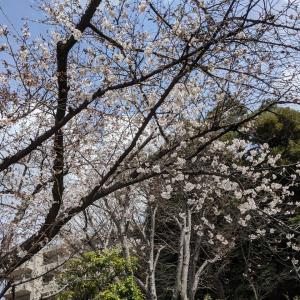 1歳3か月の1週目、復職前最後の名古屋への帰省