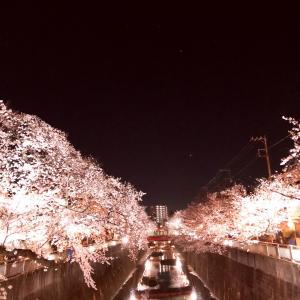 夜桜散歩♡