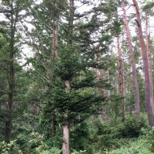 オーダー木型の完成