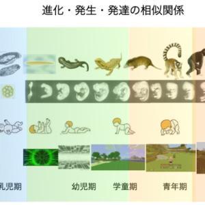 【第一部】発達・発生・進化における反復構造|三体思想トライアドローン(テキスト対談)