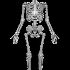 【第二部】身体構造と空間構造の対応 三体思想トライアドローン(テキスト対談)